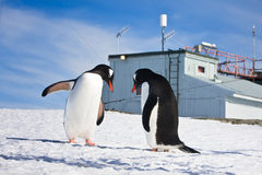 Penguins in Antarctica Royalty Free Stock Images