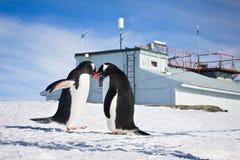 Penguins in Antarctica Stock Images