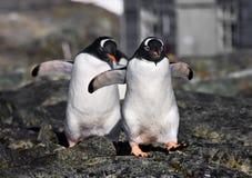 Penguins in Antarctica Royalty Free Stock Photos