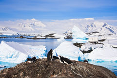 Penguins in Antarctica. Penguins on a stony coast in Antarctica Royalty Free Stock Photography