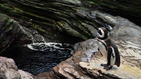 Penguins in the aquarium stock photo