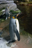 Penguins in the Arctic aquarium Royalty Free Stock Image
