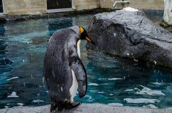 Penguins at Asahiyama Zoo. Royalty Free Stock Photos