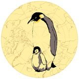 Penguins baby and parent. Vintage vector illustration of penguins baby and parent Vector Illustration