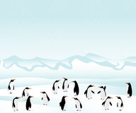 Penguins background Stock Photo