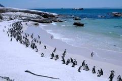 Penguin's beach Stock Images