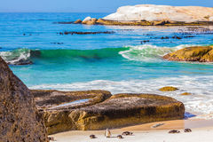 The penguins on the beach of Atlantic Ocean Stock Photos