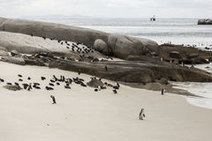 Penguins on a beach Royalty Free Stock Photography