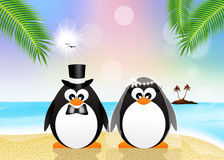 Penguins on the beach Royalty Free Stock Image