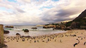Penguins on the beach at sunset Royalty Free Stock Image