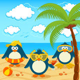 Penguins on the beach vector Royalty Free Stock Photography
