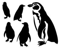 Penguins vector Royalty Free Stock Photo