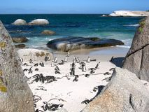 Penguins at Boulders beach Stock Photos