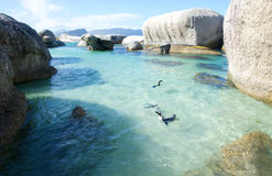 Penguins on Boulders Royalty Free Stock Images
