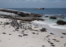 Penguins in Cape Point South Africa Stock Photo