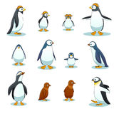 Penguins characters in various poses vector set Stock Image