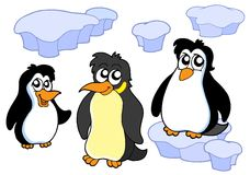 Penguins collection Royalty Free Stock Photos