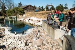 Penguins in Copenhagen Zoological Garden. COPENHAGEN, DENMARK - APRIL 18, 2015: The popular Danish tourist attraction The Copenhagen Zoological Garden welcomes royalty free stock image