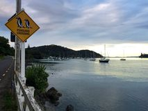 Penguins crossing and boats in harbour, Mangonui, New Zealand Stock Photos