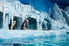Penguins in decorative cave in oceanarium Royalty Free Stock Photos