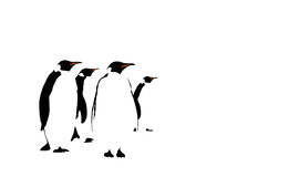 Penguins. Digital drawing of a group of penguins Stock Image