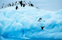 Penguins diving off glacier into sea