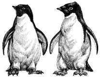 Penguins drawing Royalty Free Stock Image