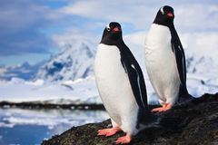Penguins dreaming  on a rock Stock Photos