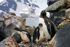 Penguins family Stock Photos