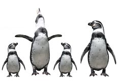 Penguins family Stock Photo