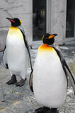 Penguins family. Two penguins Royalty Free Stock Photos