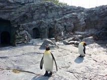 Penguins family in zoo. Lovely penguin family in famous Zoo of Hokkaido royalty free stock image