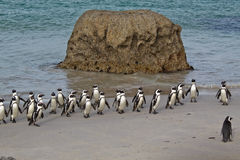 Penguins after the fishing Royalty Free Stock Photos