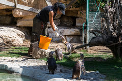 Penguins at Hay Park in Kiryat Motzkin Stock Image