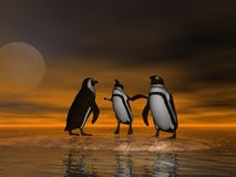 Penguins On Ice. 3 Penguins at moonrise Stock Photography