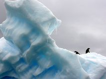 Penguins on iceberg  Stock Images