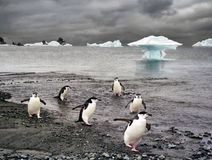 Penguins and iceberg in Antarctica. Penguins and icebergs at background Stock Images