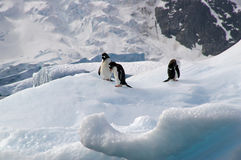 Penguins on iceberg in Antarctica. Three penguins on an iceberg at Pleneau on the Antarctic Peninsula stock photography