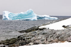 Penguins and icebergs stock image