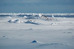 Penguins in icescape stock photography