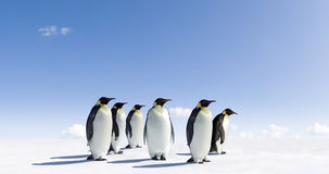 Penguins on icy landscape royalty free stock image