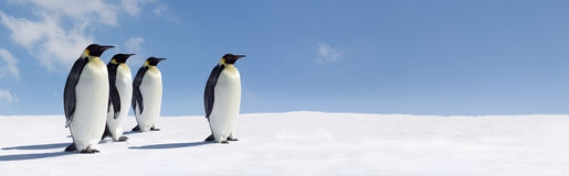 Penguins in icy panorama. Panoramic view of group of penguins walking across icy Antarctica landscape, blue sky background