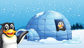 Penguins and the igloo Royalty Free Stock Image