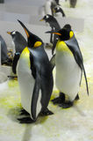 The penguins Stock Photography