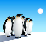 Penguins. King penguins illustration in vector Stock Photo