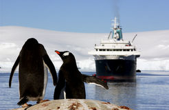 Penguins looking at a boat Royalty Free Stock Photos