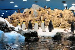 Penguins at Loro Park Stock Image