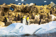 Penguins Royalty Free Stock Images