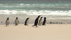Penguins - Magellan and Gentoo Royalty Free Stock Photography