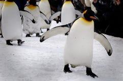 Penguins march. At Abashiri Zoo, Hokkaido, Japan Royalty Free Stock Photography